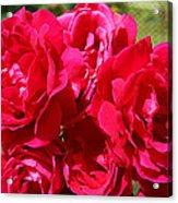 Red Rose Garden Art Prints Roses Acrylic Print