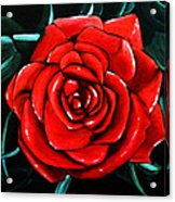 Red Rose In Black And White Acrylic Print