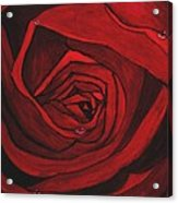 Red Rose  Acrylic Print by Kat Poon