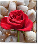 Red Rose On River Rocks 2 Acrylic Print