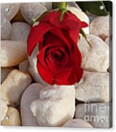 Red Rose On River Rocks Acrylic Print
