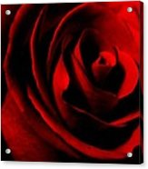 Red Rose Petals Acrylic Print