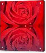 Red Rose Reflects Acrylic Print