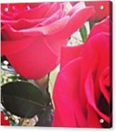 #red #rose #roses #flower #nature #new Acrylic Print