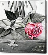 Red Rosebud Acrylic Print