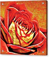 Red Rosey Acrylic Print