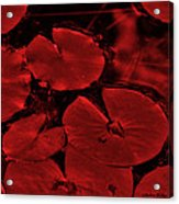 Red Ruby Tuesday Acrylic Print