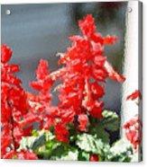 Red Salvia Brush Strokes Acrylic Print