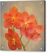 Red Scarlet Orchid On Grunge Acrylic Print by Rudy Umans