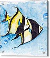 Red Sea Banner Fish  Acrylic Print