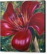 Red Silk Cotten Bombex Acrylic Print