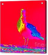 Red Sky Seagull Acrylic Print