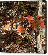 Red Sparkle Acrylic Print