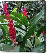 Red Spikes In St Lucia Acrylic Print