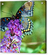Red Spotted Purple Butterfly Photopainting Acrylic Print