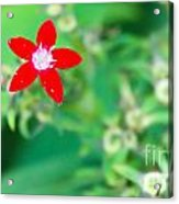 Red Star Acrylic Print