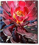 Red Succulent Plant Acrylic Print