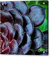 Red Succulents Acrylic Print