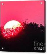 Red Summer Sunset Acrylic Print
