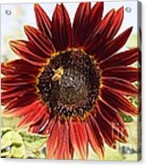 Red Sunflower And Bee Acrylic Print by Kerri Mortenson