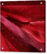 Red Ti The Queen Of Tropical Foliage Acrylic Print