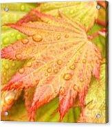 Red Tip Leaf Acrylic Print