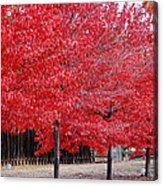 Red Tree Line Acrylic Print