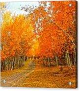Red Tree Rd Acrylic Print