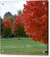 Red Trees 2 Acrylic Print
