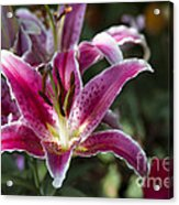 Red Tropical Flowers Acrylic Print