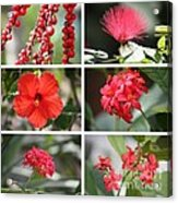 Red Tropicals Collage Acrylic Print