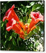 Red Trumpet Acrylic Print