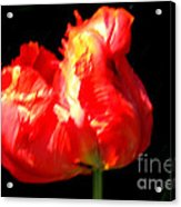 Red Tulip Blurred Acrylic Print by M C Sturman