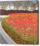 Red Tulip Garden Acrylic Print