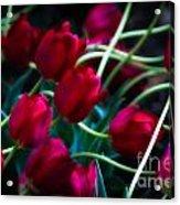 Red Tulip River Acrylic Print