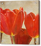 Red Tulips In Art Acrylic Print