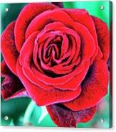 Red Velvet Palm Springs Acrylic Print