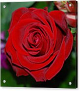 Red Velvet Rose Acrylic Print