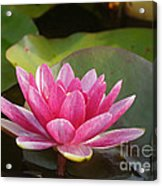 Red Water Lily 4 Acrylic Print