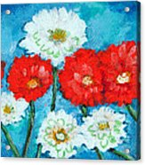 Red White And Blue Zinnia Flowers Acrylic Print
