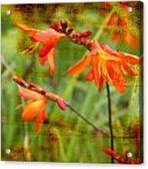 Red Wild Flowers Acrylic Print