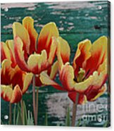 Red Yellow Tulips Acrylic Print