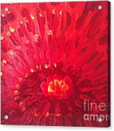 Red Zinnia Acrylic Print