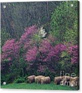 Redbud - Fm000095 Acrylic Print