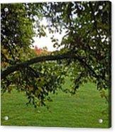 Redbud Tree In Autumn Acrylic Print