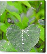 Redbud Water Droplets Acrylic Print