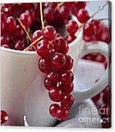 Redcurrant Close Up Acrylic Print