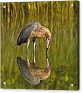 Reddish Egret Reflection Acrylic Print