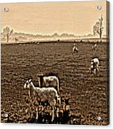 Redeemed By The Lamb Acrylic Print