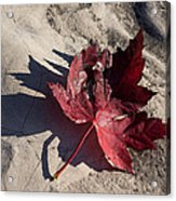 Reds And Purples - Deep Red Maple Leaf And Its Shadow Acrylic Print